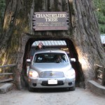 Drive through a tree