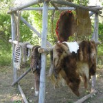 Drying different animal skins