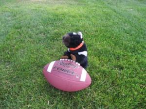 Davo learns football
