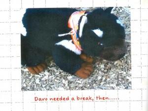 Goodbye Davo